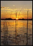 Sunset im Okawango