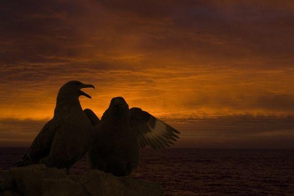 Sunset in Antartica II