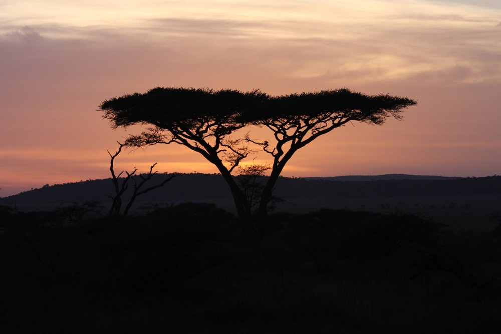 Sunset in the Serengeti (Tanzania)