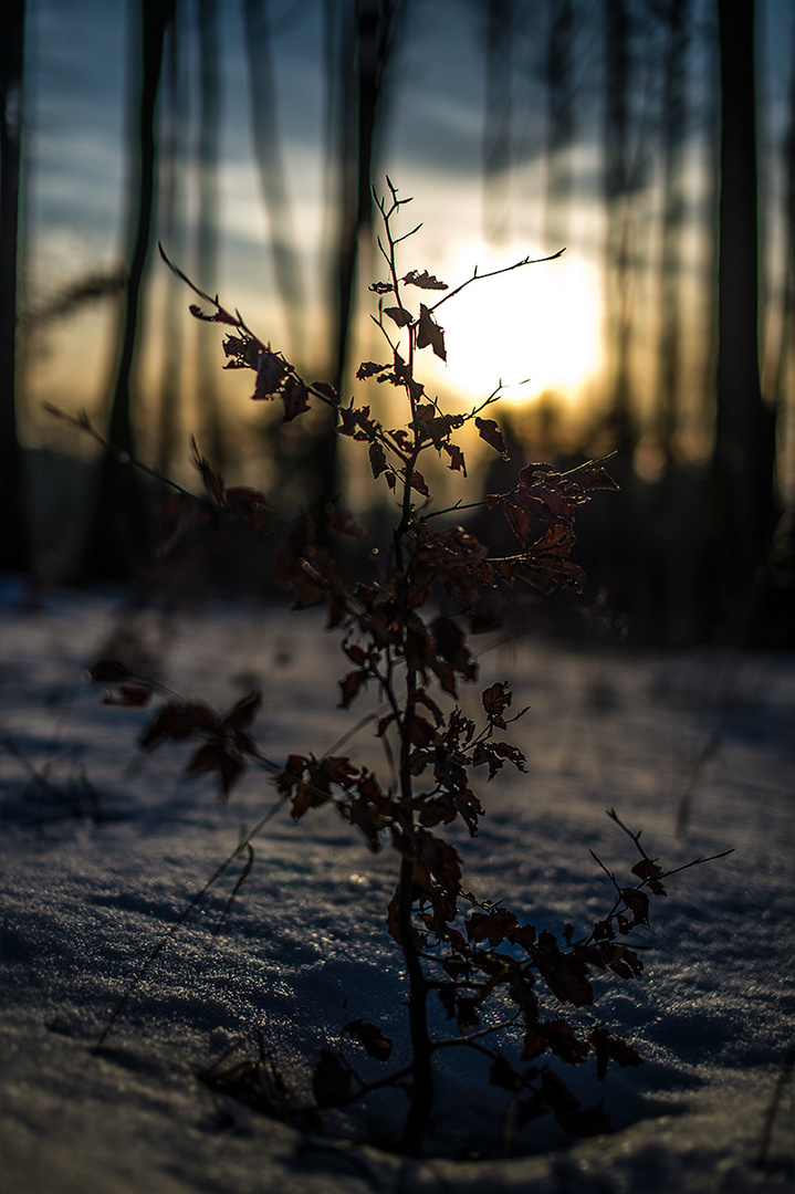 Sunset in the Winter