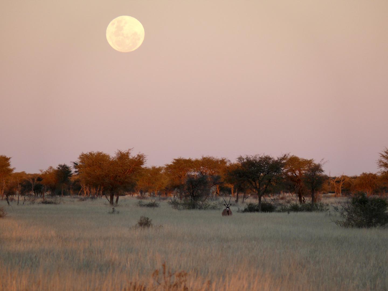 Sunset Kalahri