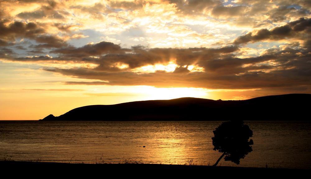Sunset Opononi with tree (NZ)
