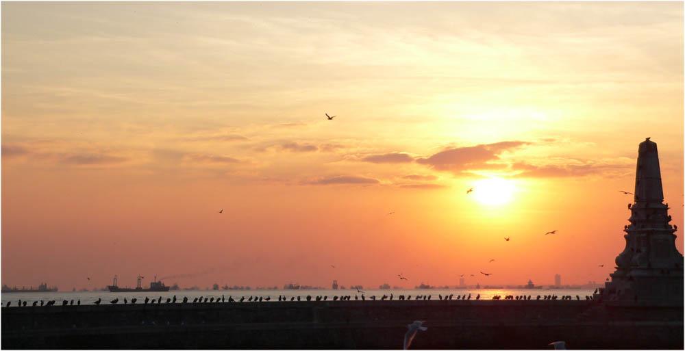 sunset+birds
