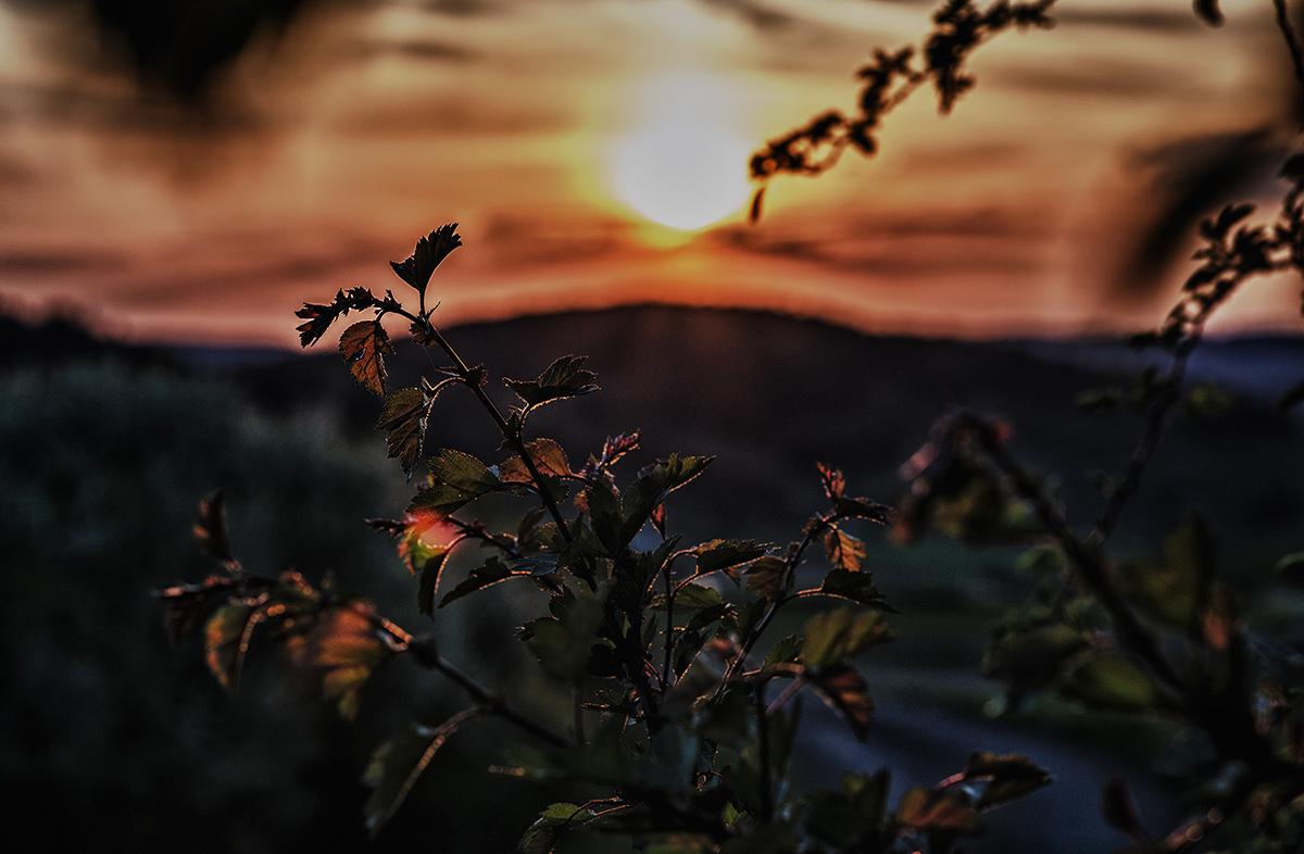 Sunsetdream