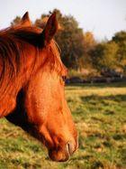 Sunshine horse