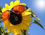 Sunshine, sunshine reggae...