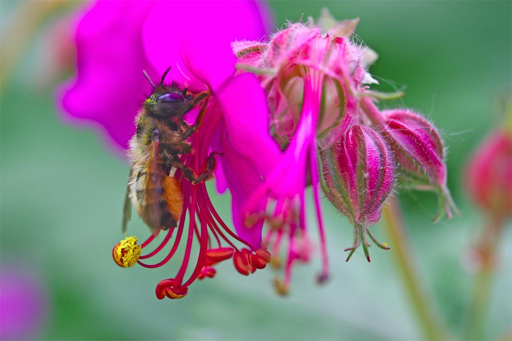 Super cette fleur pour se tenir ...