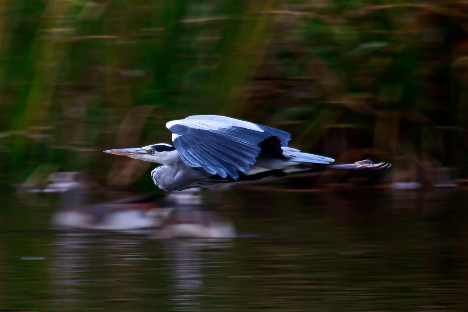 Super Heron