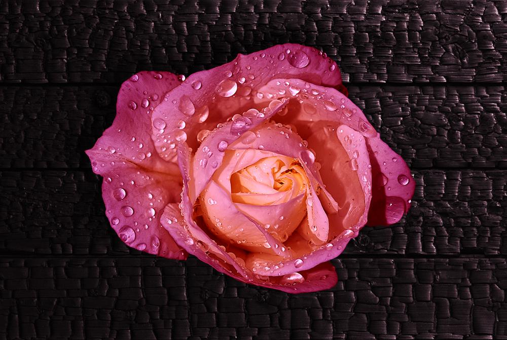 Super-Rose :)