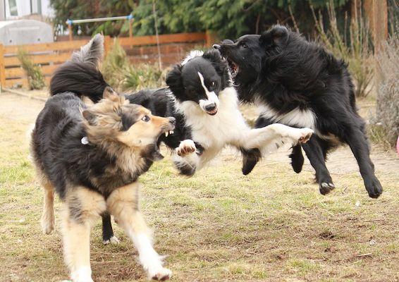 Superdog:-)