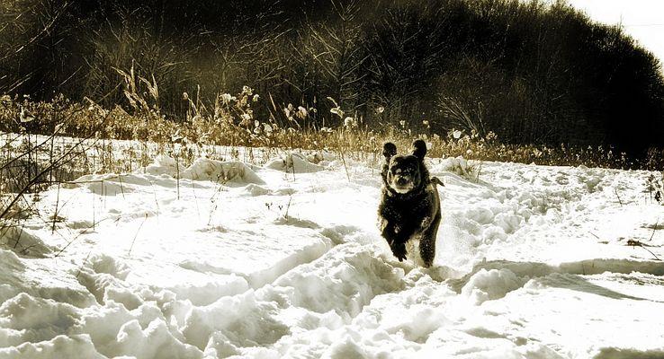 *~superdog~*