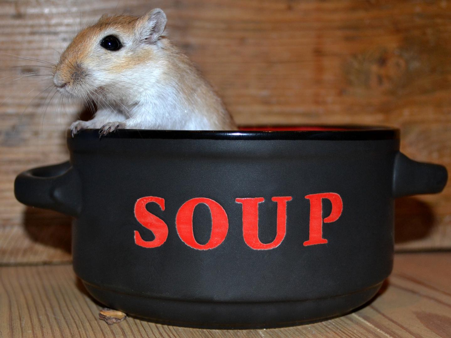 Suppeneinlage