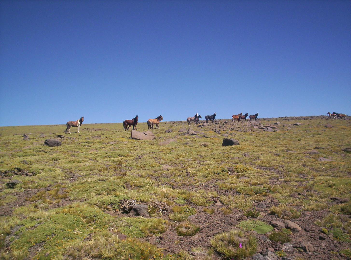 Sur de Mendoza
