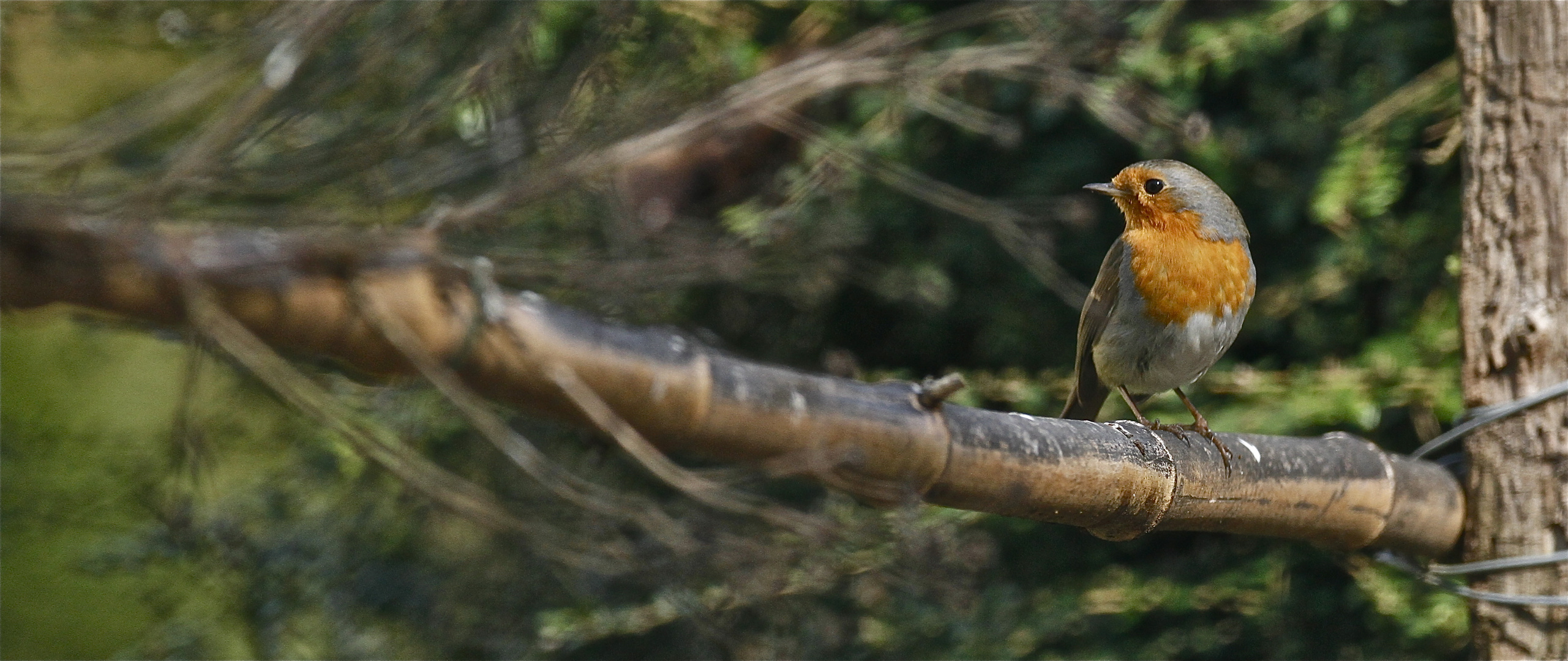 Sur la branche