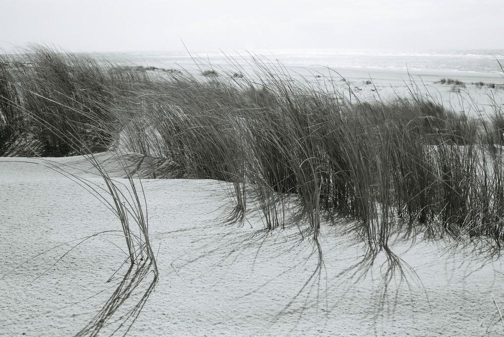 Sur la dune abandonnée...