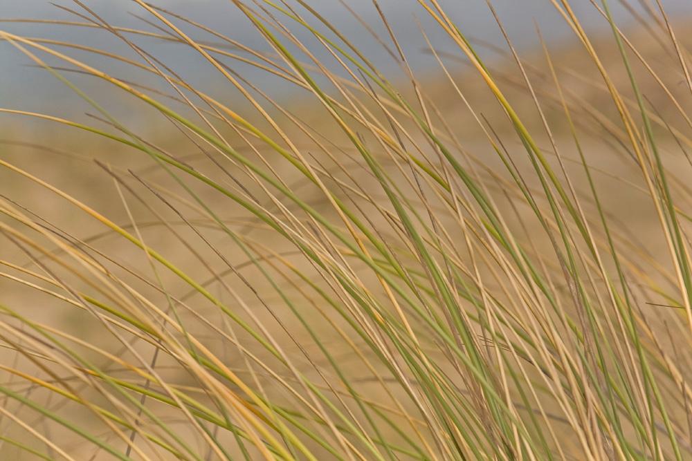 sur la dune poussées par le vent d' Est !