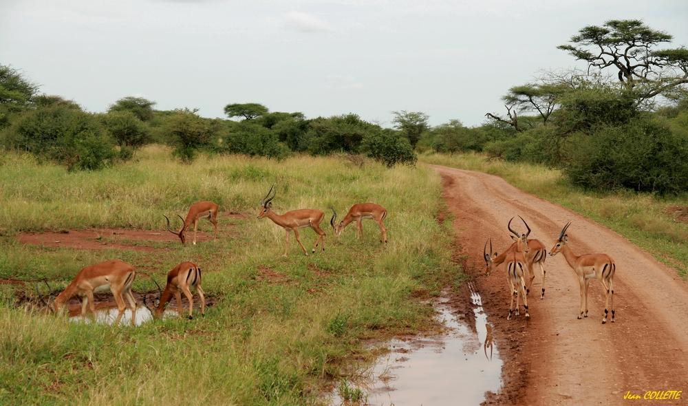 Sur la piste ambiance de la savane africaine photo et - Animaux savane africaine ...
