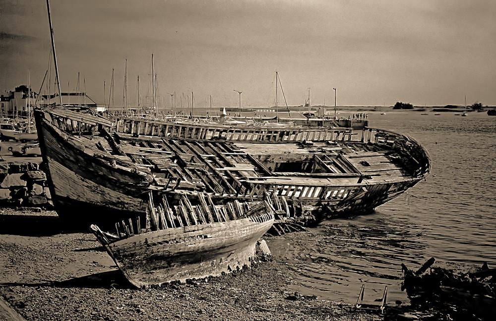 Sur la plage abandonnée, coquillages et crustacés.....