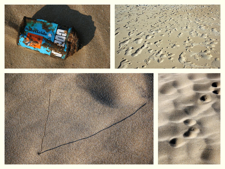 """"""" Sur la plage abandonnée, coquillages et crustacés..."""""""