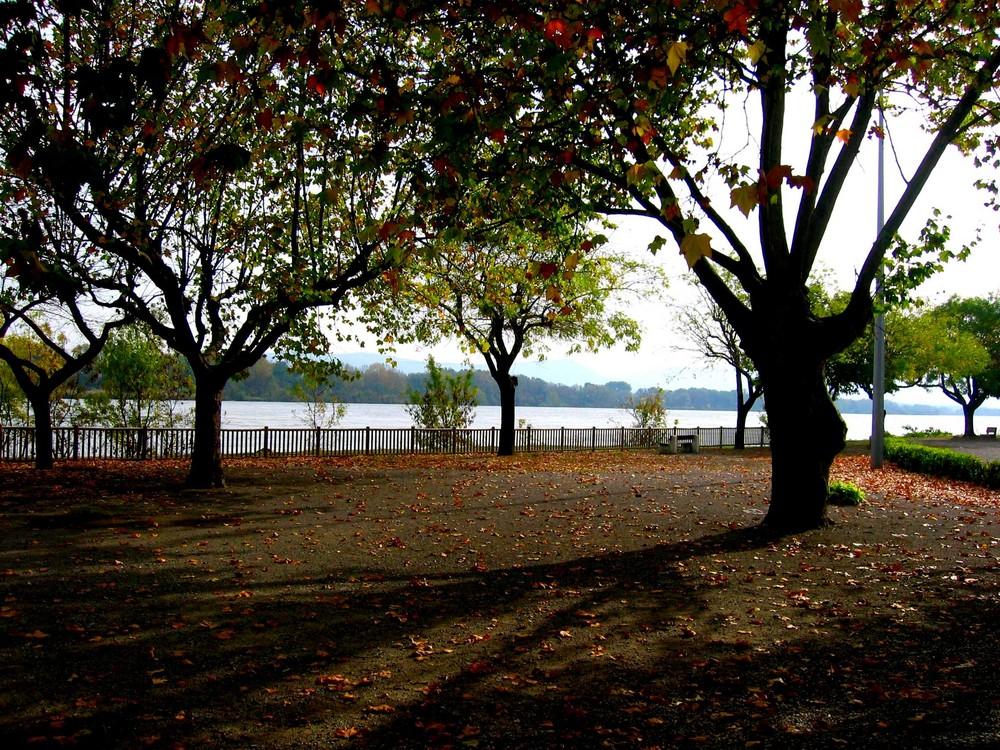 Sur le bord du fleuve d'automne