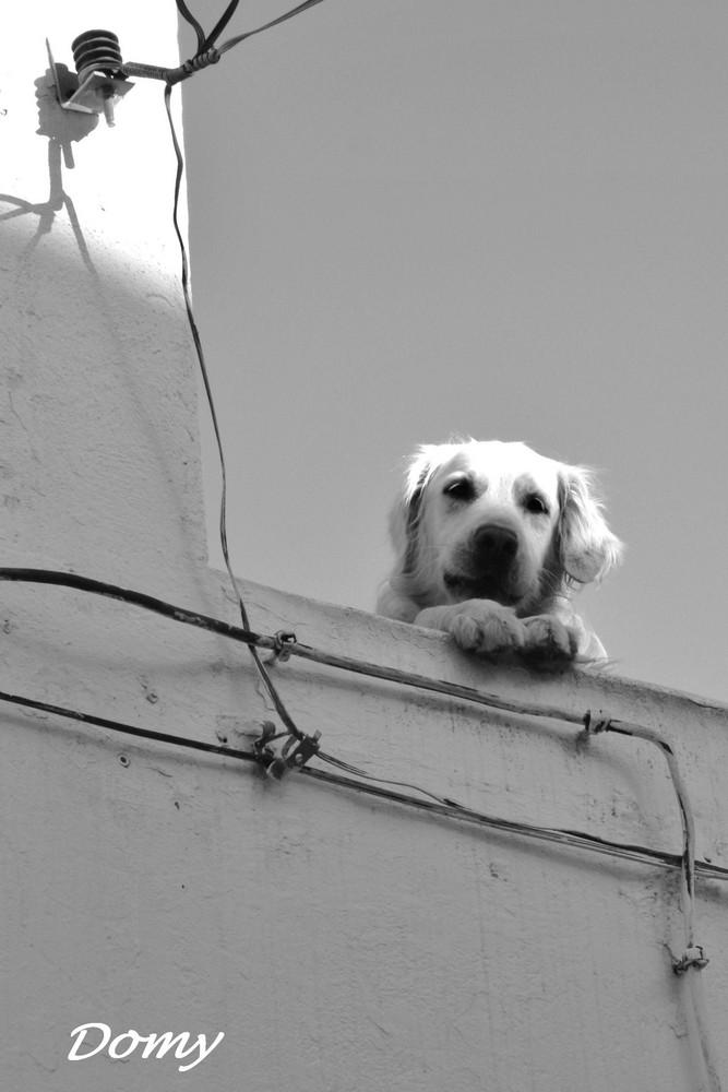 Sur le toit je monte la garde !!!