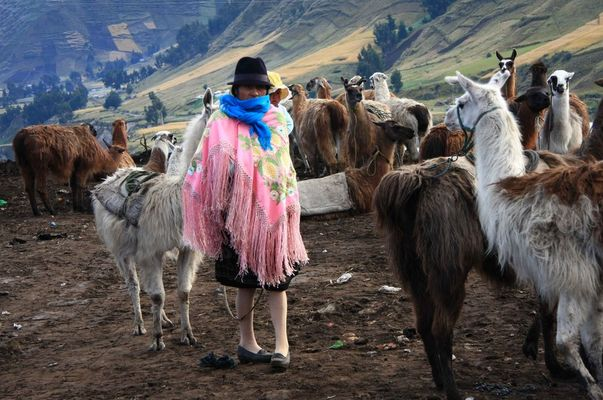 Sur les hauts plateaux équatoriens 2