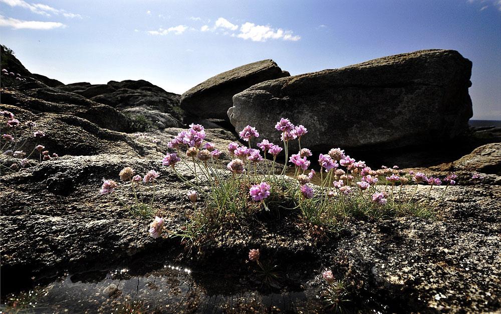 Sur les rochers....... la vie