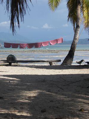 Sur un îlot de madagascar