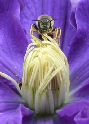 Sur une fleur d'hibiscus