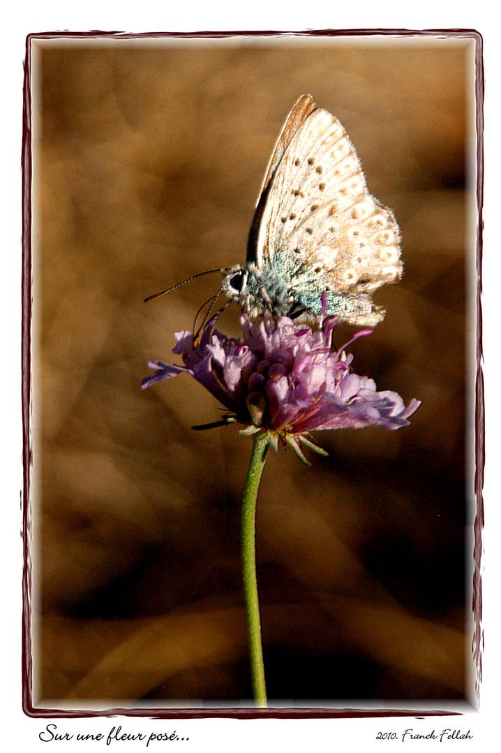 Sur une fleur posé...