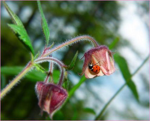 *sur une jolie fleur*