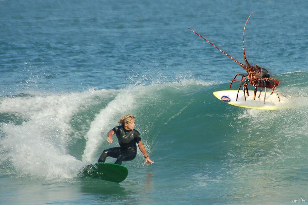 Surfer Langouste