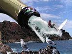 """""""Surfers Paradise"""" oder """"Was kommt denn da für ein kommischer Vogel geflogen"""""""