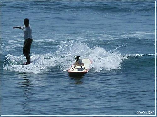 Surfin' Hot-Dog