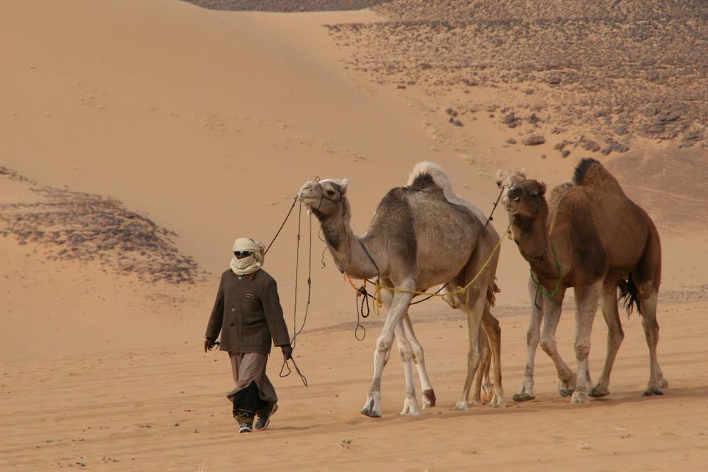Suri mit seinen Kamelen im Akkakus