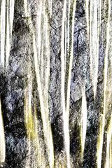 Surreale Baumlandschaft # 7480-9150