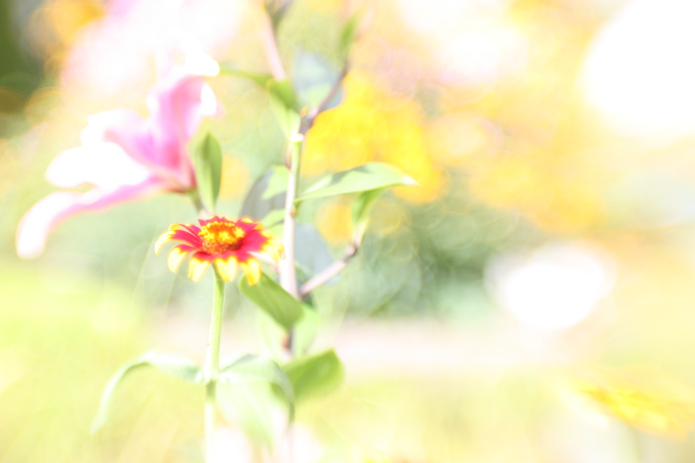 Surreale Blume
