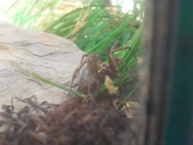 Susi die Spinne