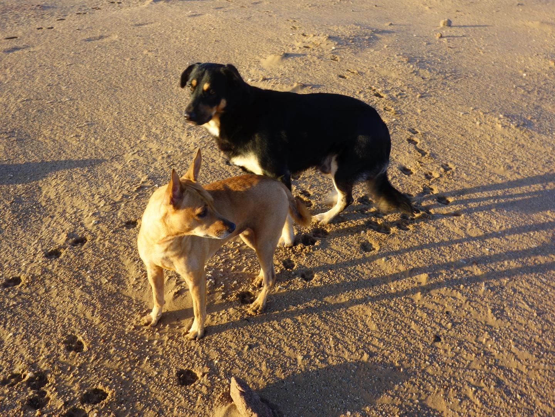 Susi und Wolfi morgens in der goldenen Wueste