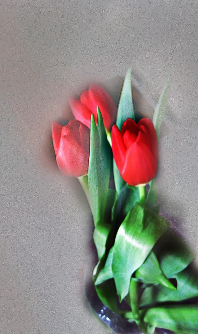 Suspiros de Tulipán