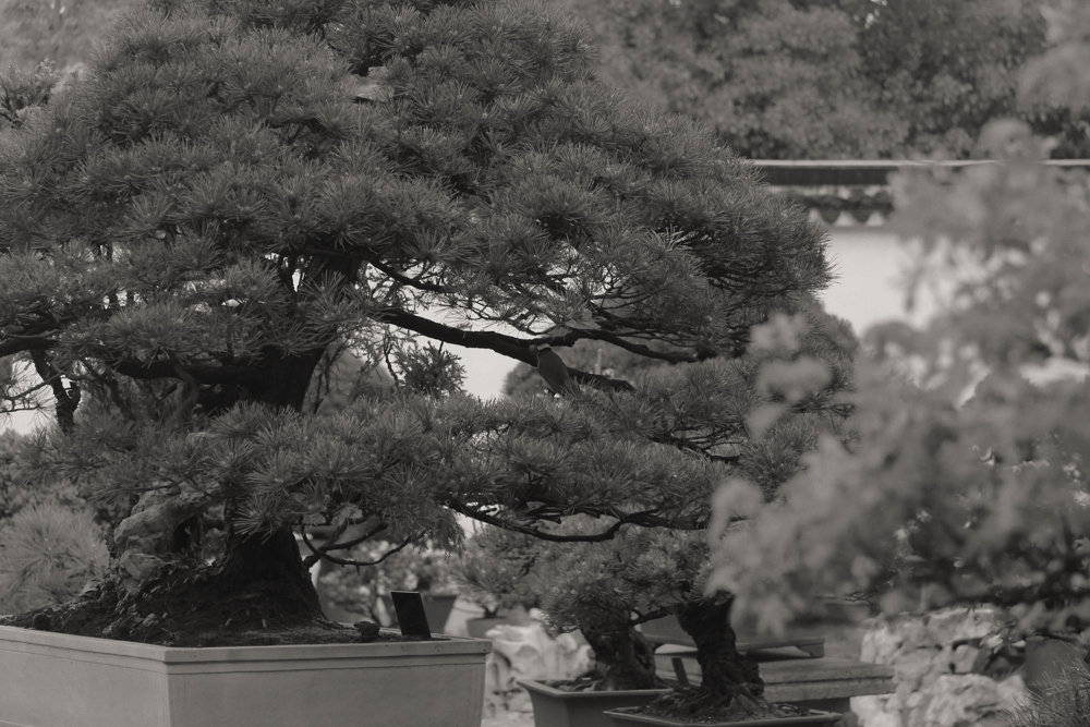 Suzhou Garden 5