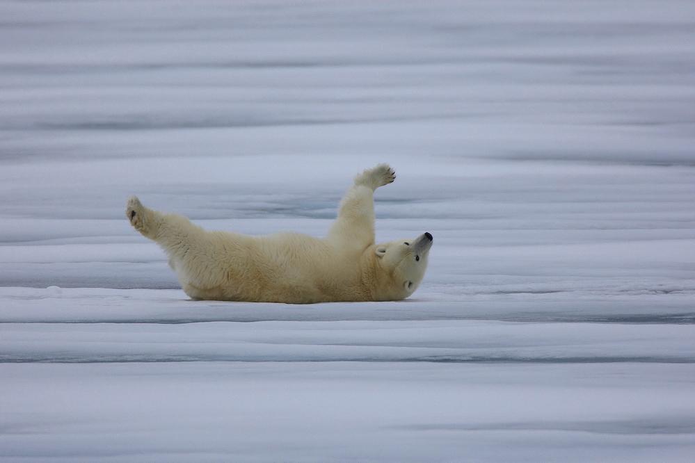 Svalbard #11
