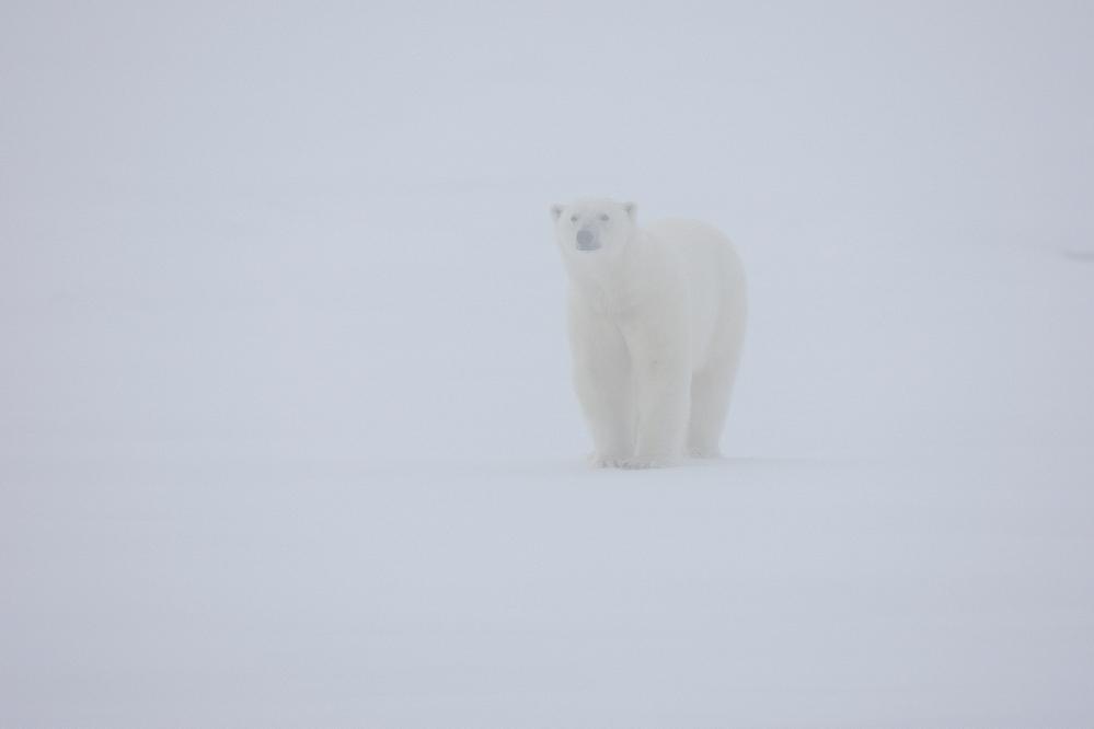 Svalbard #20