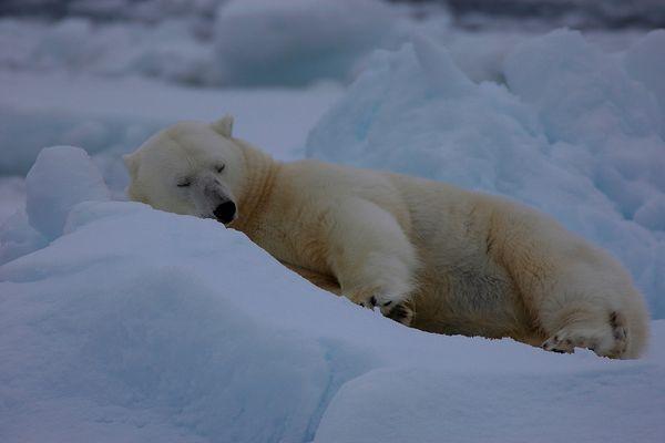 Svalbard #3