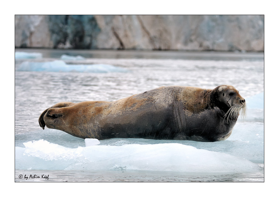 Svalbard #4