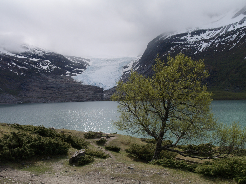 Svartison Gletscher 1