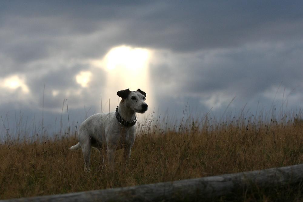 Sven.....das Schaf;)