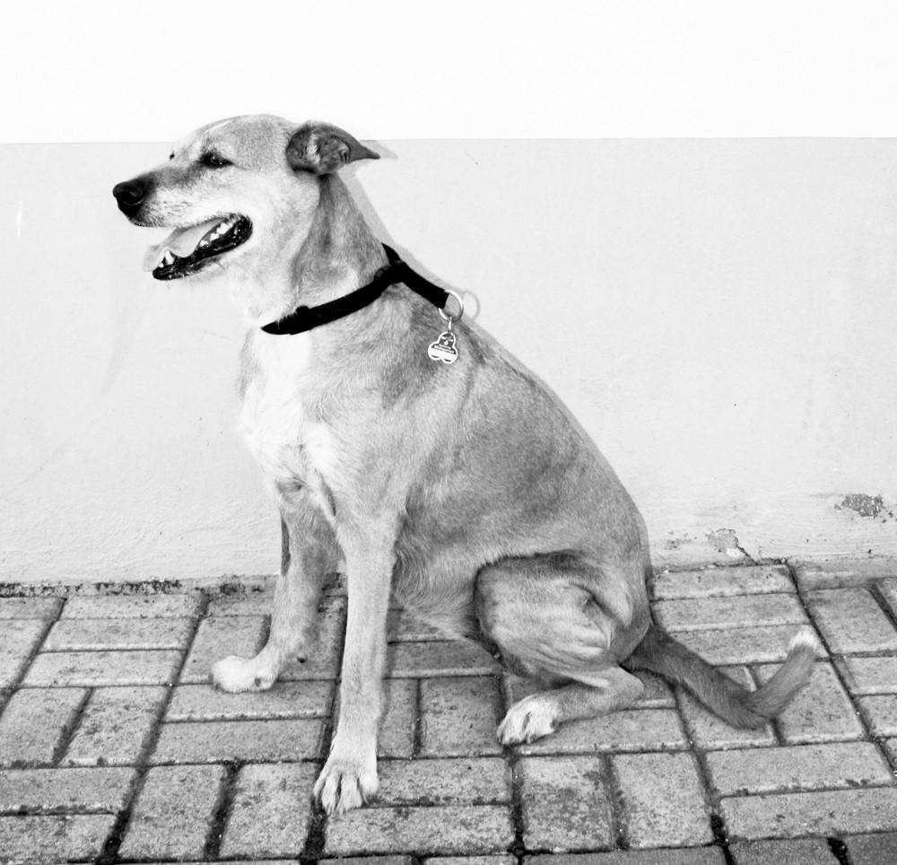 S/W Mein Pflegehund
