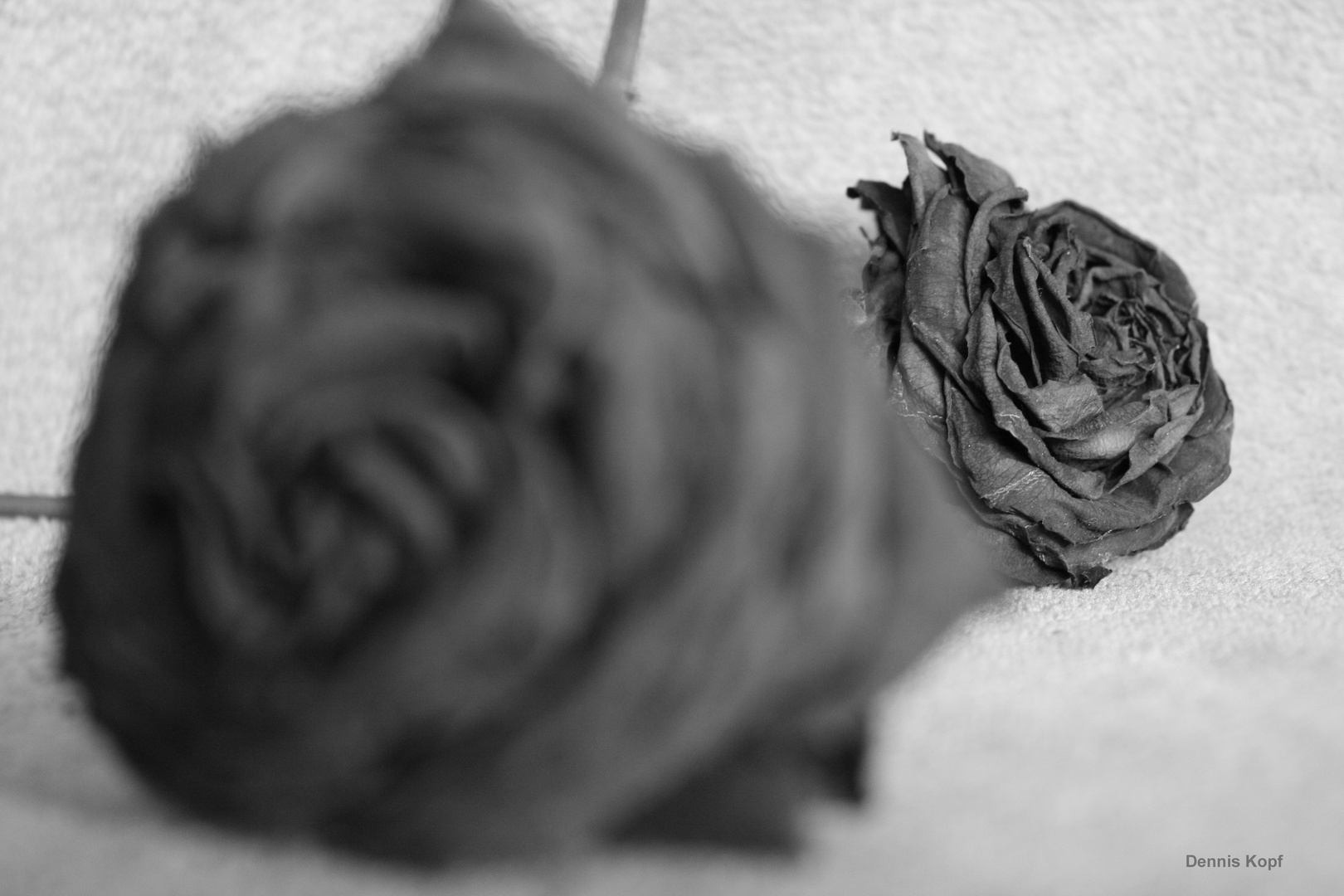 S/W Rose 3