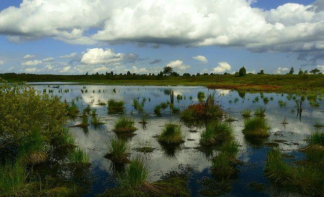 Swamp hike (26)